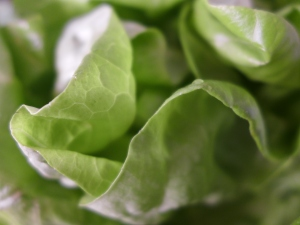 these days, before I eat my grocery store lettuce, I have to take photos.  Send me your lettuce photos