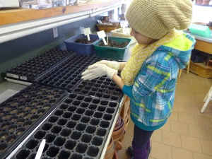 A GEC middle school volunteer filling trays on sowing day.