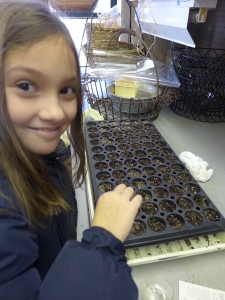 In ~ten minutes this young volunteer was able to hand-sprinkle ~115 seeds.