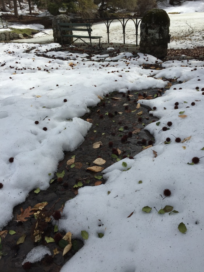 For our littlest explorers, we find these rushing rivers of melting snow in unusual places.  Do you remember seeing this stream headed into the reflecting pond?