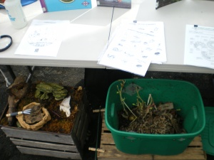 Our green worm bin at the GCG Mentor Day