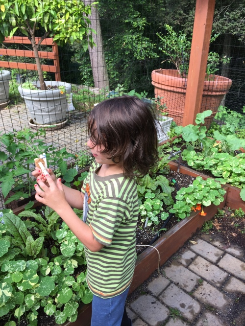 This summer we challenged PreK-3rd graders to not only look closer at plants and how they function, but to change their perspective to that of a small Earthling, a clothespin person, and use plants as building blocks in careful imaginative play and design.