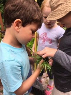 Thursdays, Sprouts & Seedlings Afterschool Enrichment continues our summer adventures. We're all ready for more imaginative exploring in the garden and Montgomery Pinetum. (age 3.5-8). REGISTER HERE for an eight week session.