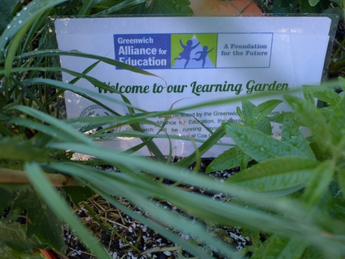 Thanks to a grant awarded to the Greenwich Public Schools by the Greenwich Alliance for Education, students and their earthlings were introduced to a wide range of plants.